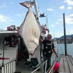 scott halibut